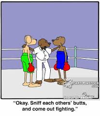 boxing dogs