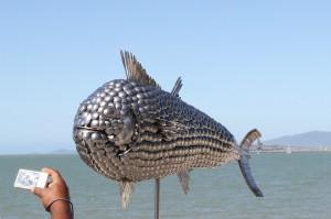 e fish