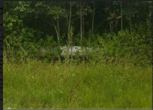 pipeline overgrown