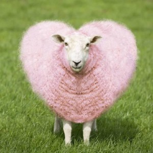 sheep-ewe-pink-heart-shaped-wool_a-l-12464937-14258395