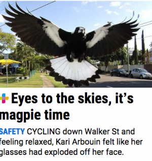 magpie attack