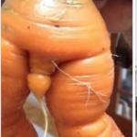 Carrot cock