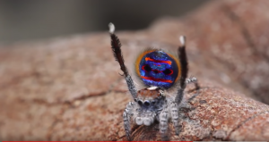 spider dancingScreen Shot 2020-03-28 at 11.03.12 pm