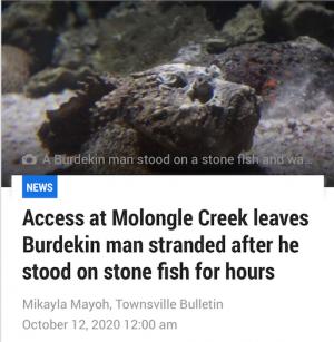 Stone fish stranded Screen Shot 2020-11-29 at 10.32.18 am
