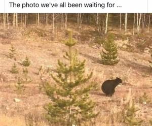 Bear answer MG_4402